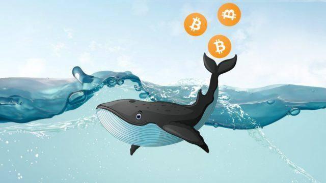 Адреса биткоин-китов за две недели лишились 60 000 BTC