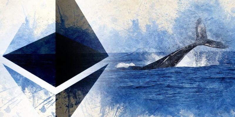 Количество монет ETH, контролируемых «китами», выросло почти до годового максимума