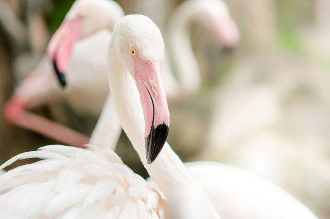 DeFi-протокол Flamingo.Finance начал распределять свои токены среди инвесторов