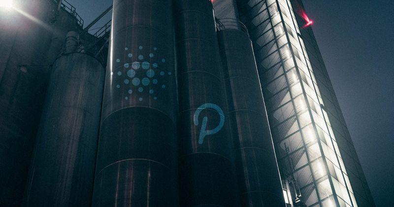 Дубайский инвестиционный фонд FD7 Ventures: Cardano и Polkadot вырастут в 20 раз