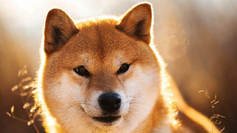 Криптобиржи добавляют поддержку «убийцы Dogecoin»