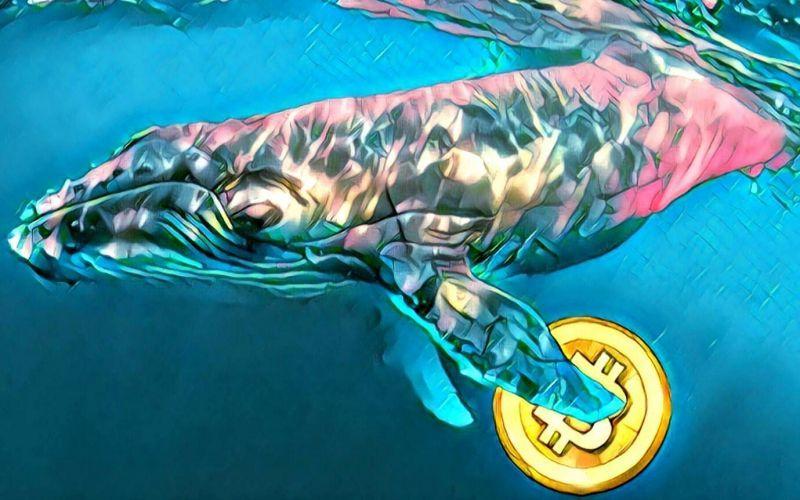 Какое влияние киты могут оказать на крипторынок?