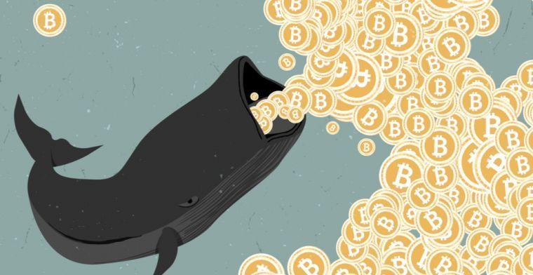 Киты пользуются падением цены биткоина