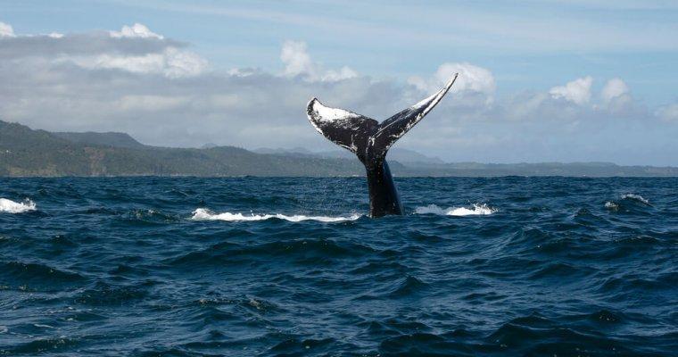 Биткоин-киты запасаются монетами на падении цены