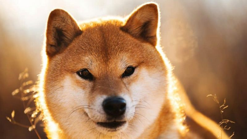 Shiba Inu потребляет рекордное количество газа в сети Ethereum