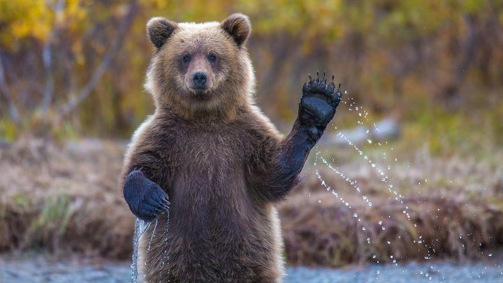 Пора ли уже говорить о наступлении «медвежьего» рынка биткоина?