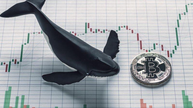 «Кит» закупился биткоинами на $13 млн во время падения рынка
