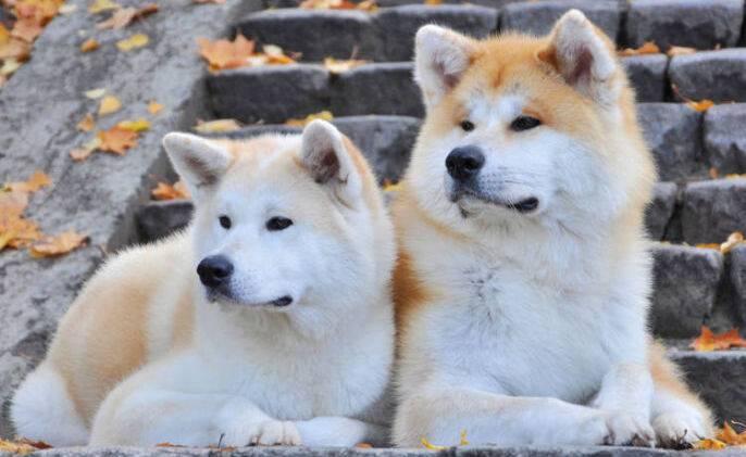 У Dogecoin появились подражатели, показывающие внушительный рост