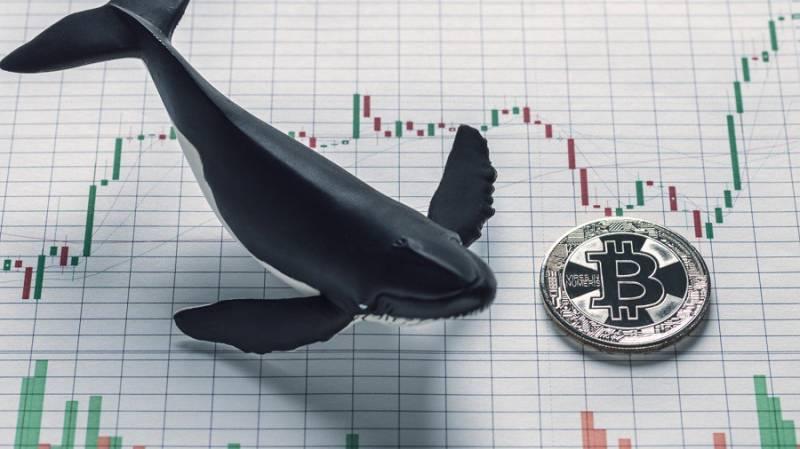 WhaleMap: Киты поддержат биткоин в случае падения